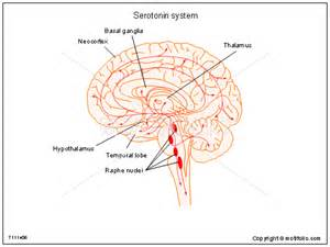 serotonin system ppt powerpoint drawing diagrams
