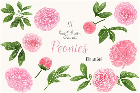 peony clipart pink peonies clip set graphics on creative market