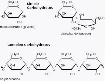 molecular structure of carbohydrates due to the simple