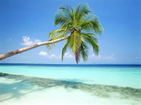 tropical island paradise tropical island maldives picture tropical island maldives photo tropical island maldives pic