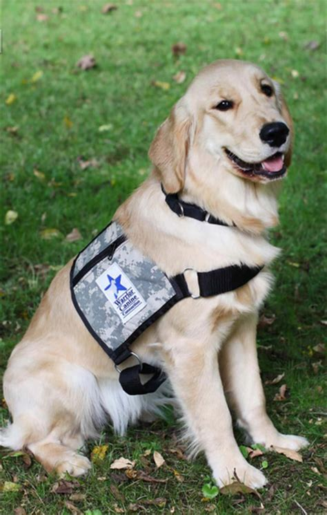 how to get involved with service dogs our service dogs warrior canine connection