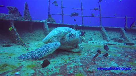 boat crash shark shipwreck scuba diving hawaii with sharks youtube
