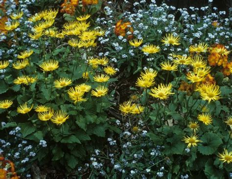 plants for conditions 7 best images about soil on colorful