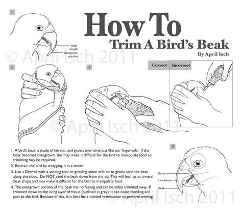 How To Make A Bird Beak Out Of Paper - how to trim a bird s beak a biologist s canvas