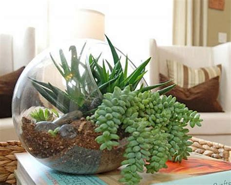 25 indoor and outdoor succulent gardens of all sizes