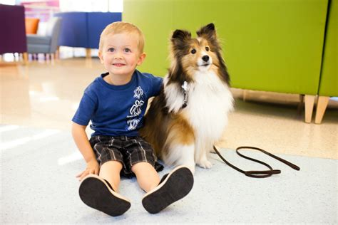 how to your for pet therapy thank you pet therapy dogs and their owners choc children s