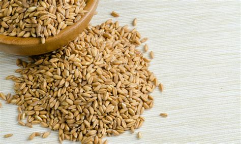 whole grains vs wheat farro vs wheat berries which is the better ancient grain