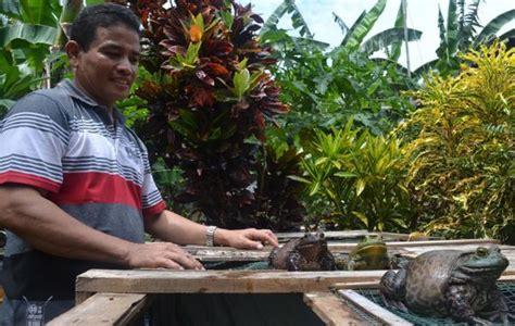 Bibit Lele Sangkuriang Jakarta Timur cara ternak ayam mei 2011