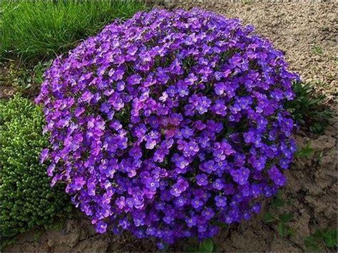 piante fiori da giardino piante da fiori piante da giardino piante da fiori