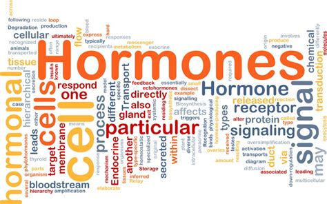 healthy fats hormones how exercise related hormones a powerful loss