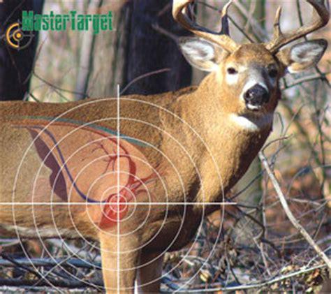 printable whitetail deer targets deer target for gun outside pinterest deer targets