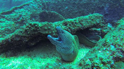dive oman oman diving mirbat 2016