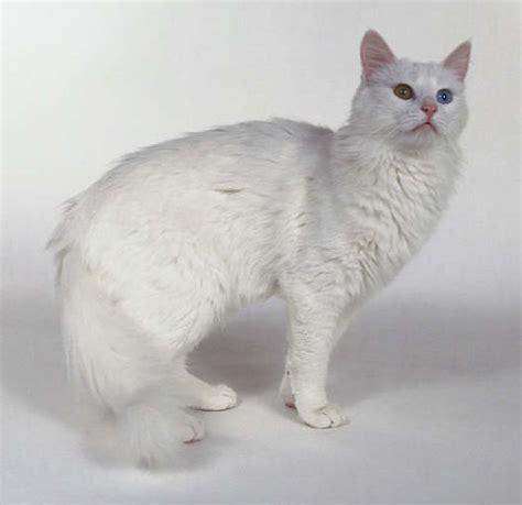 Sho Kucing Yang Bagus gambar kucing bagus gambar c