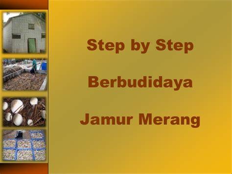 Budidaya Jamur Merang step by step budidaya jamur merang