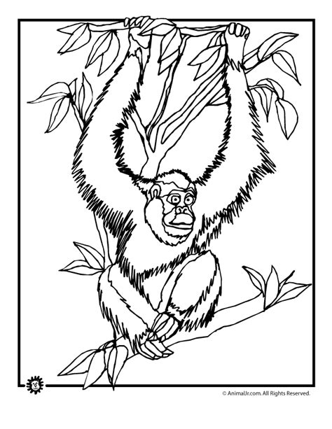 indonesian animals coloring pages free coloring pages of indonesian