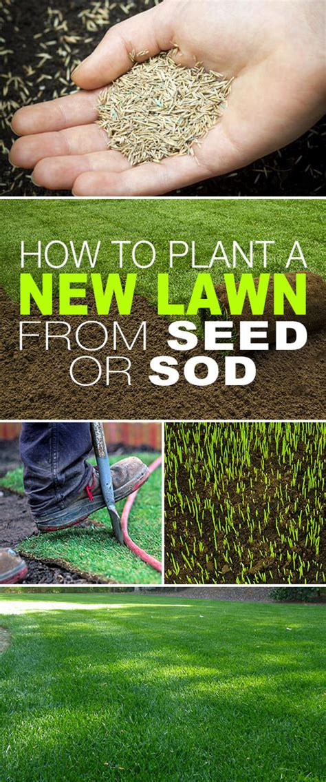 how to plant a new lawn from seed or sod colormag