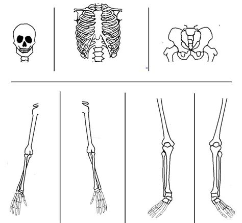 skeleton bones cut out memes