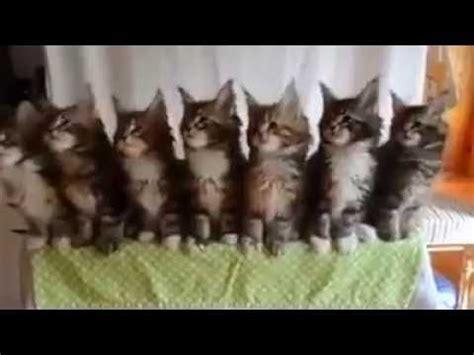 imagenes que se mueven gatos gatos que se mueven al ritmo de la musica youtube