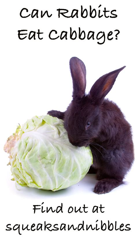 vegetables bunnies can eat can rabbits eat cabbage