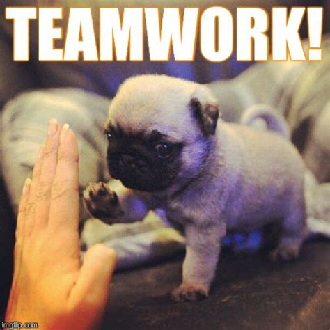 Teamwork Meme - funny memes about teamwork google search dogs