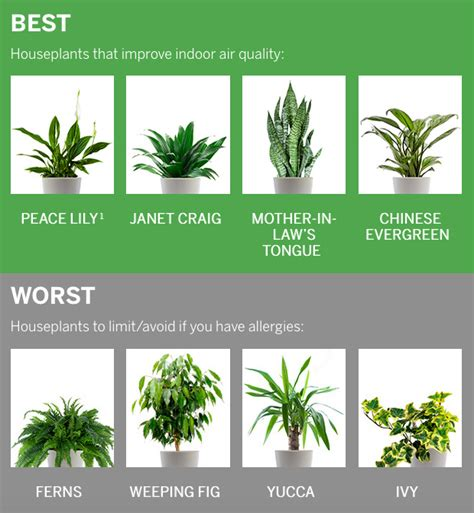 good plants for indoors healthy houseplants your stuffy nose will love