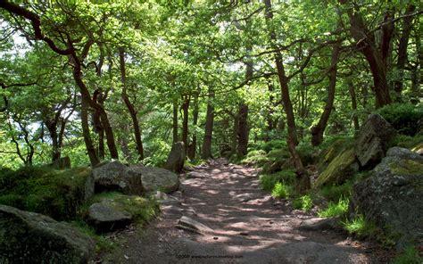 woodland tree woodland path at the longshaw estate