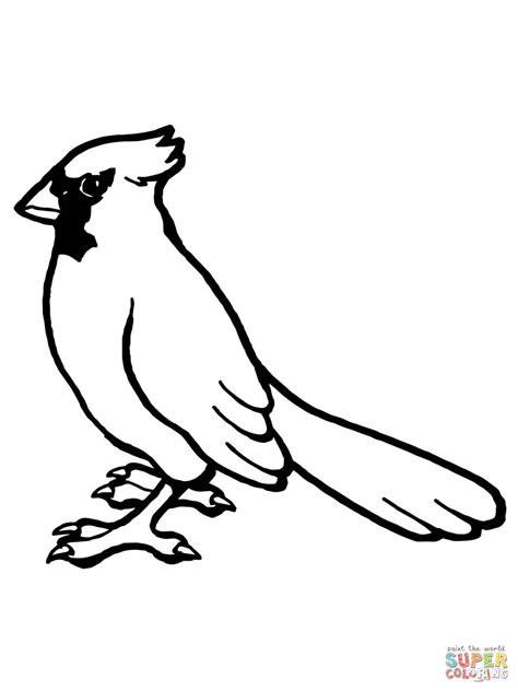 cardinal coloring page nothern cardinal bird coloring page free printable