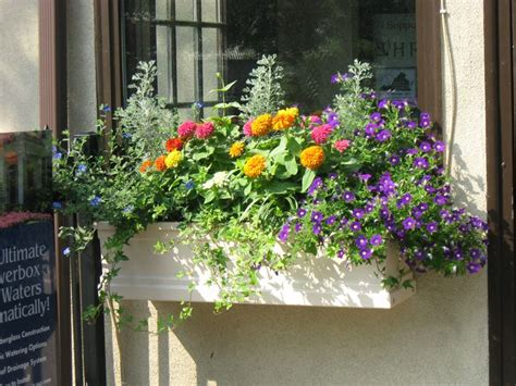 window box plants for sun sun window boxes gardens and landscapes