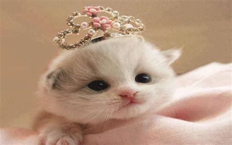 amazoncom cute cats  wallpapers appstore  android