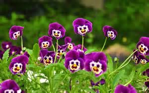 Image Flowers Garden Smiley Purple Flowers Garden New Hd Wallpapernew Hd Wallpaper