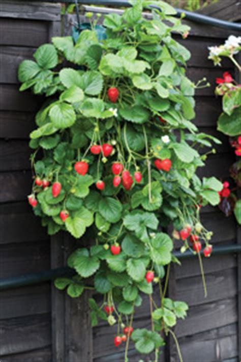 Diy Garden Trellis Ideas Vertical Gardening