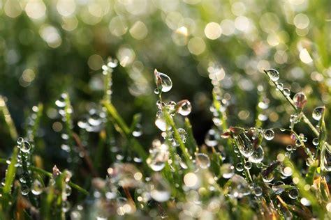 nature s nature s pearls macro moments