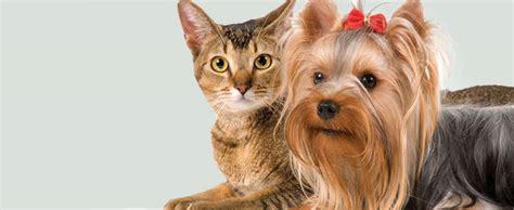 gabapentin side effects in dogs gabapentin side effects