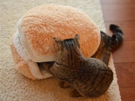 cat macaron bed macaron cat bed and maru will melt your heart