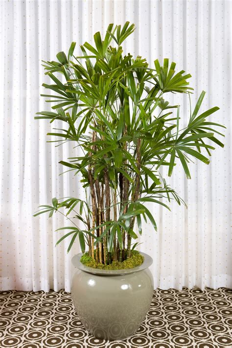 indoor plants that are beautiful and easy to maintain