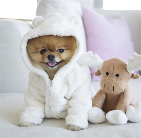 what of is jiffpom 15 facts about jiffpom thinglink