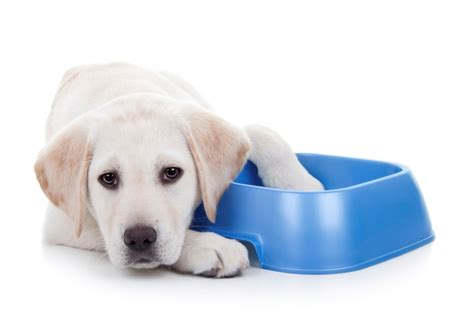 signs of constipation in dogs constipation in dogs treatment and prognosis