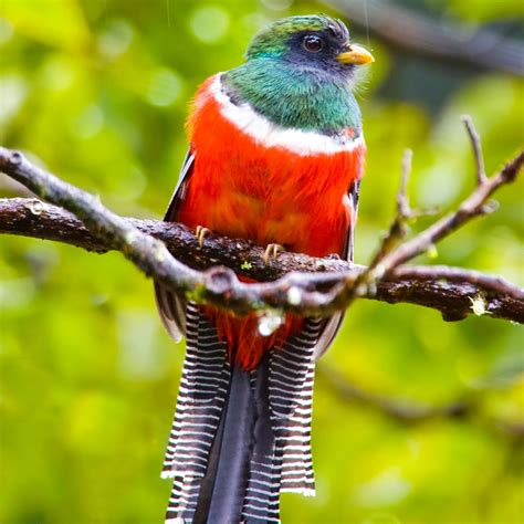 best places to go bird watching in costa rica travel