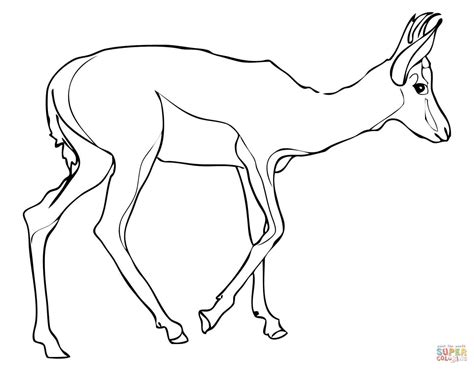 Springbok Coloring Page Free Printable Coloring Pages