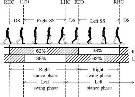 swing phase of walking quantifying dynamic characteristics of human walking for