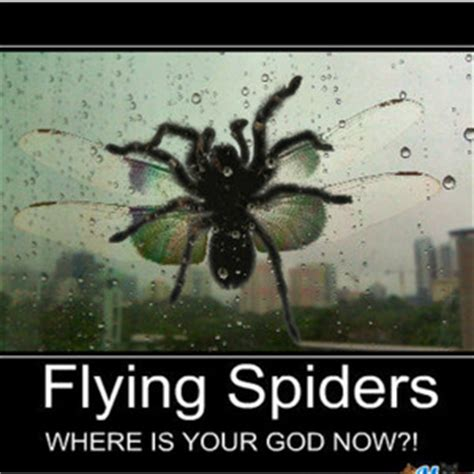 Memes About Spiders - funny spiders 0019