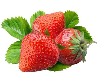 can my eat strawberries can dogs eat strawberries friendly food