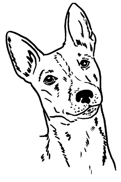 rat terrier coloring page rat terrier dogs free coloring pages