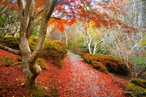 Mt Lofty Botanic Gardens by Quot Autumn At Mount Lofty Botanic Garden Quot By Kelvin Wong