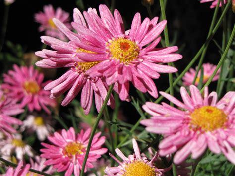 astro flower 100 astro flower mercado flores pantleon u2013