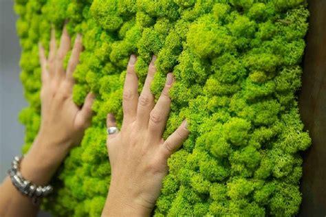 giardini verticali giardini verticali per interno planeta srl catania