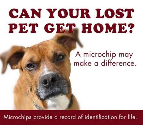 microchip cost low cost microchip clinic set for february 8 in victorville vvng real news