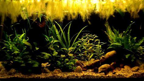 Anubias Panda 4 low tech aquarium 200l