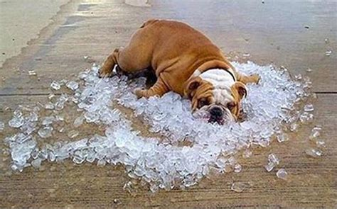 Keep Cool Heat Wave Sweeps The U S by Stay Cool This Summer By Trying These Five Things Ifcs