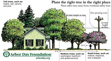 What Type Of Tree Is Used To Make Paper - jetson green how to improve home cooling with trees